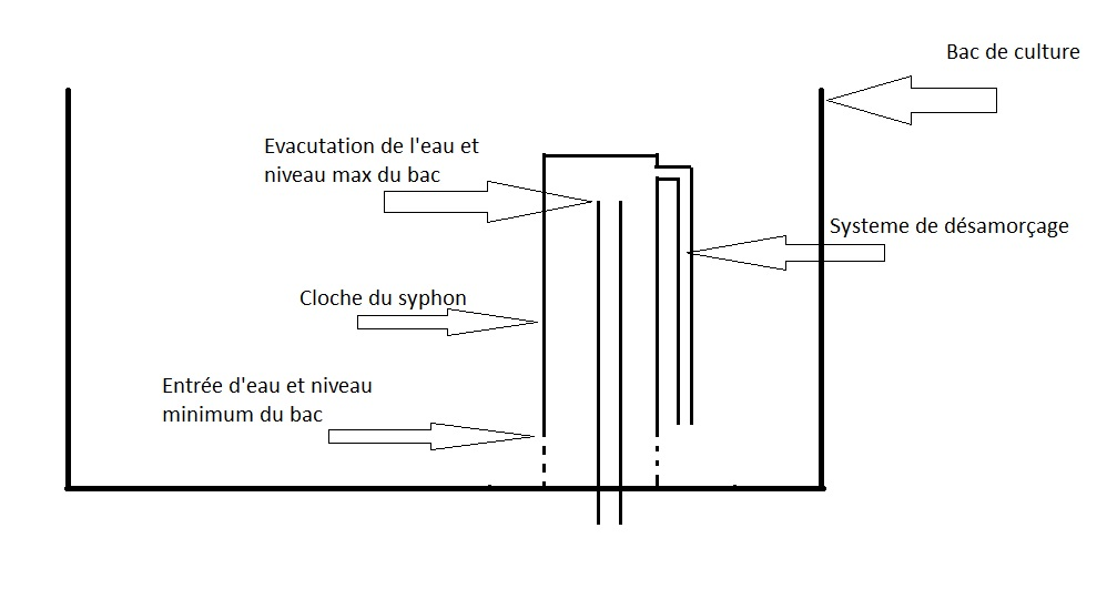 schema syphon